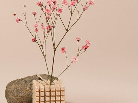 Planta sembrada en maceta de madera
