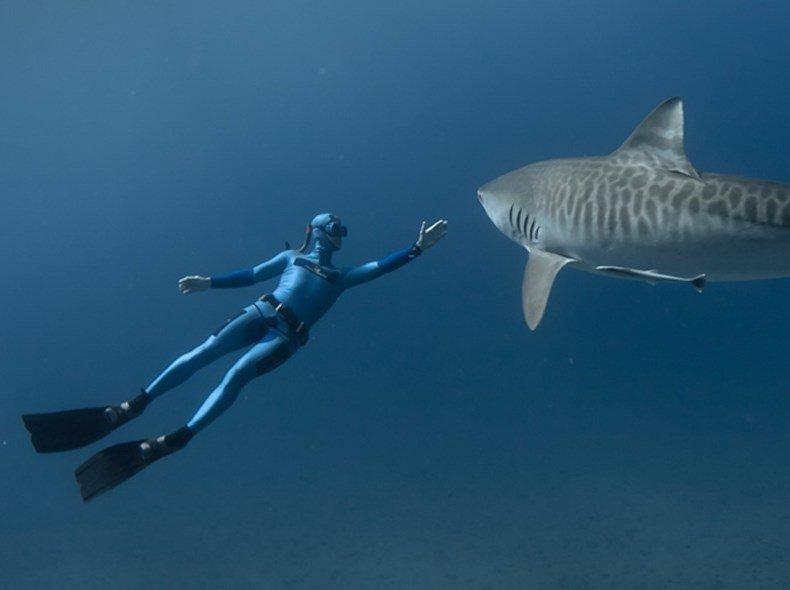 Buzo interactuando con un tiburón