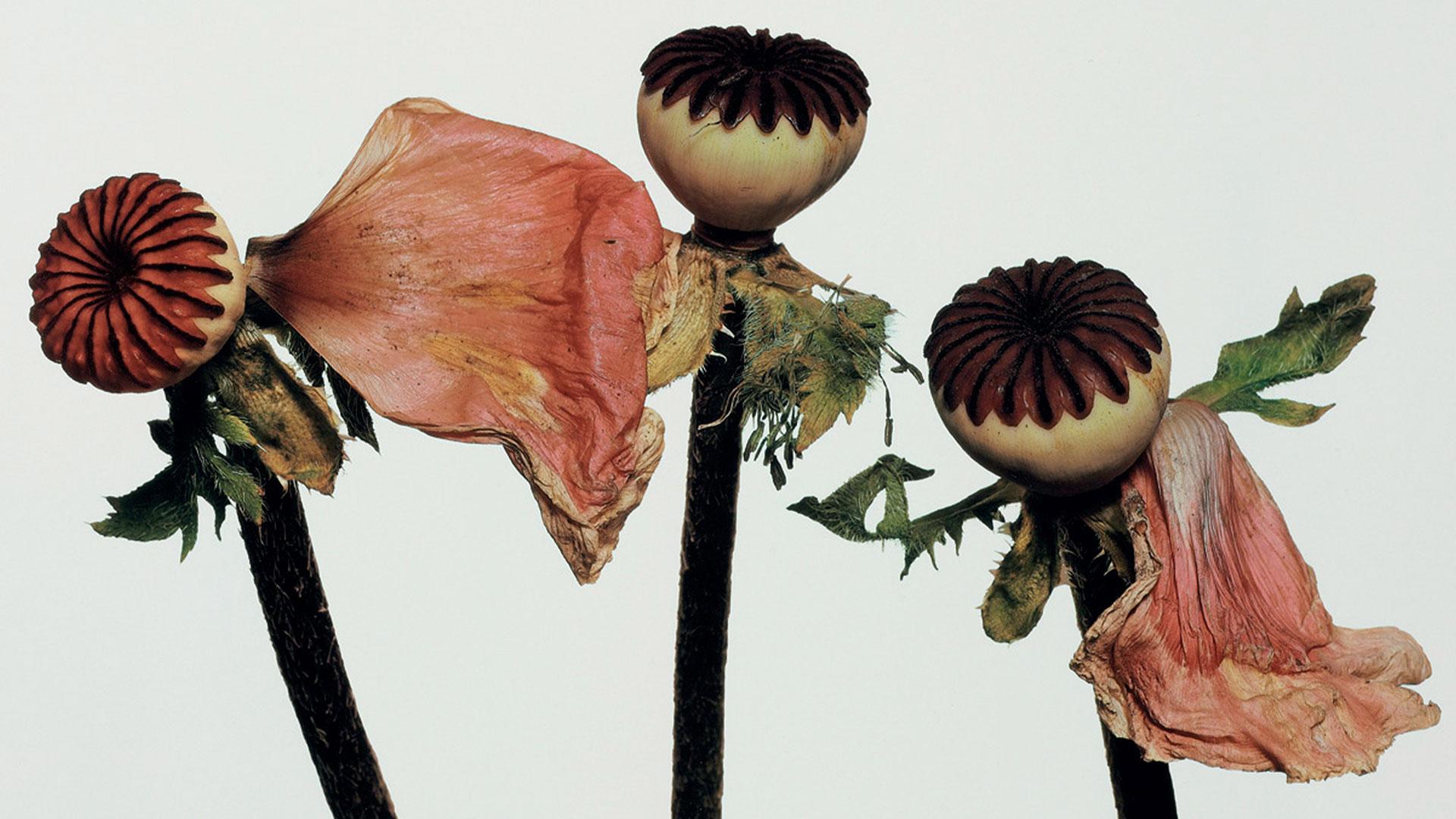 El legado de las flores hero asset