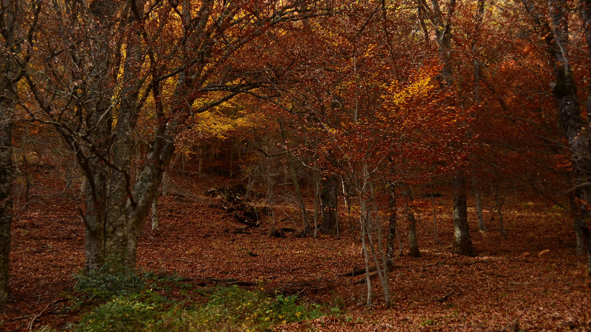 Escapadas otoño hero asset