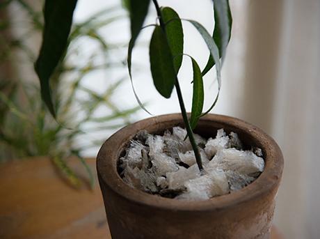 Dettaglio di un vaso con pianta del progetto Agar Plasticity