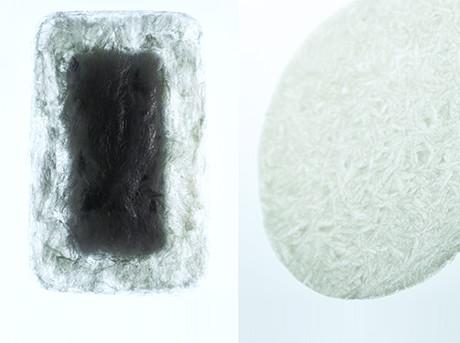 Prototipo creazione Agar Plasticity di Amam